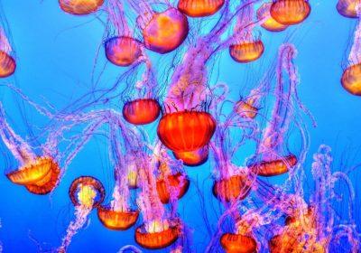 Primers auxilis al mar: què fer en cas d'una de picada de medusa?