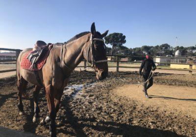 """""""Un bon tècnic d'hípica ha de saber adaptar-se a l'estat del cavall i del genet"""""""